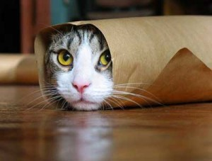 "What can I say? I like cats and this is what came up when I googled ""It's a wrap!"""